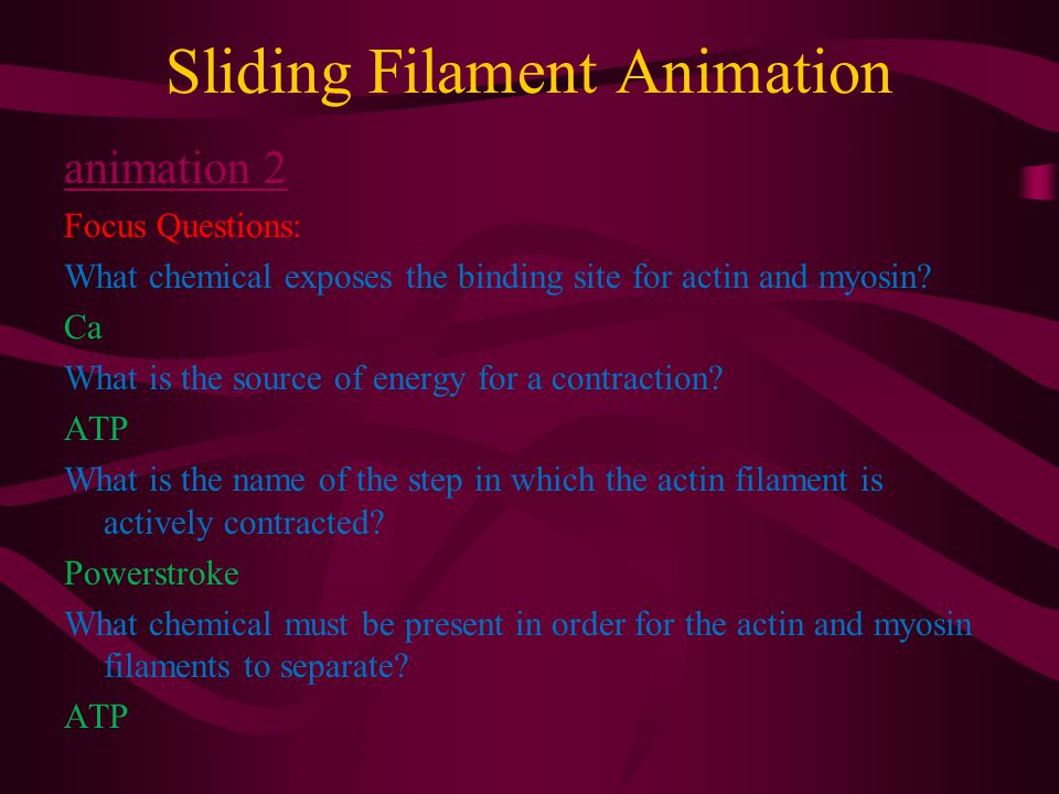 Sliding Filament Animation