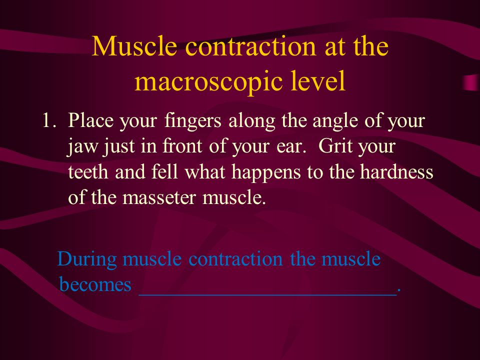 Muscle contraction at the macroscopic level