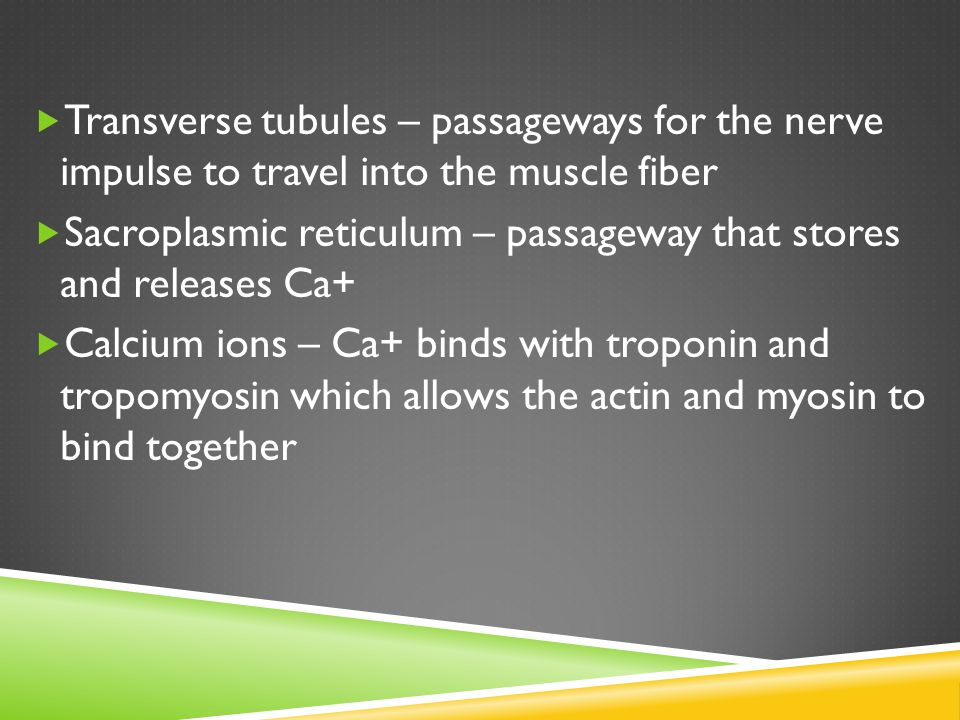 Transverse tubules – passageways for the nerve impulse to travel into the muscle fiber