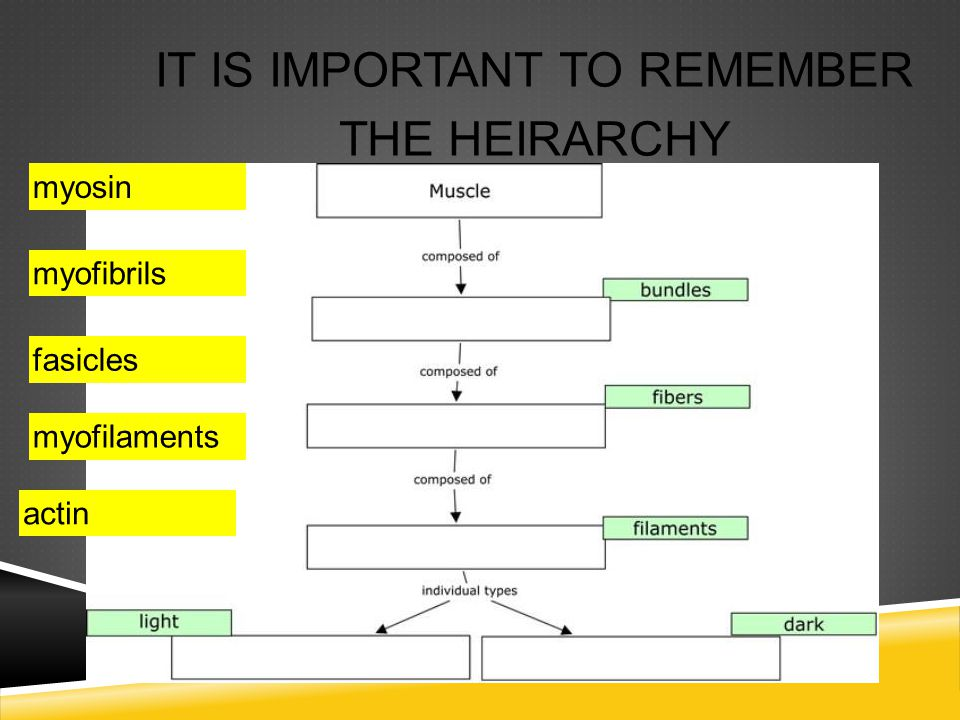 It is important to remember the heirarchy
