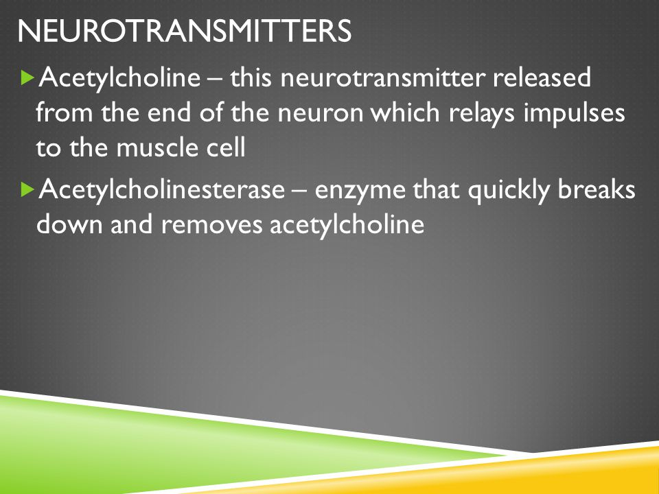 Neurotransmitters Acetylcholine – this neurotransmitter released from the end of the neuron which relays impulses to the muscle cell.