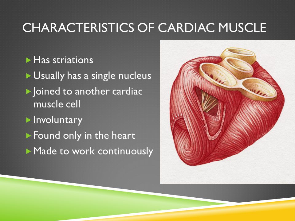 Characteristics of Cardiac Muscle