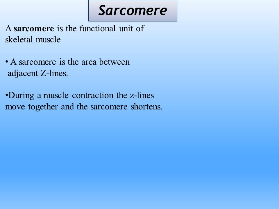 Sarcomere A sarcomere is the functional unit of skeletal muscle