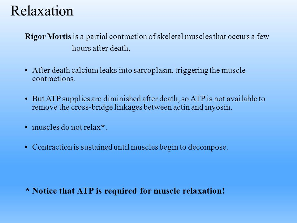 Relaxation * Notice that ATP is required for muscle relaxation!