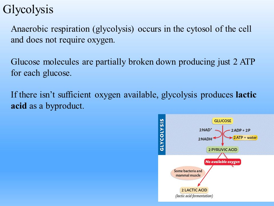 Glycolysis Anaerobic respiration (glycolysis) occurs in the cytosol of the cell and does not require oxygen.