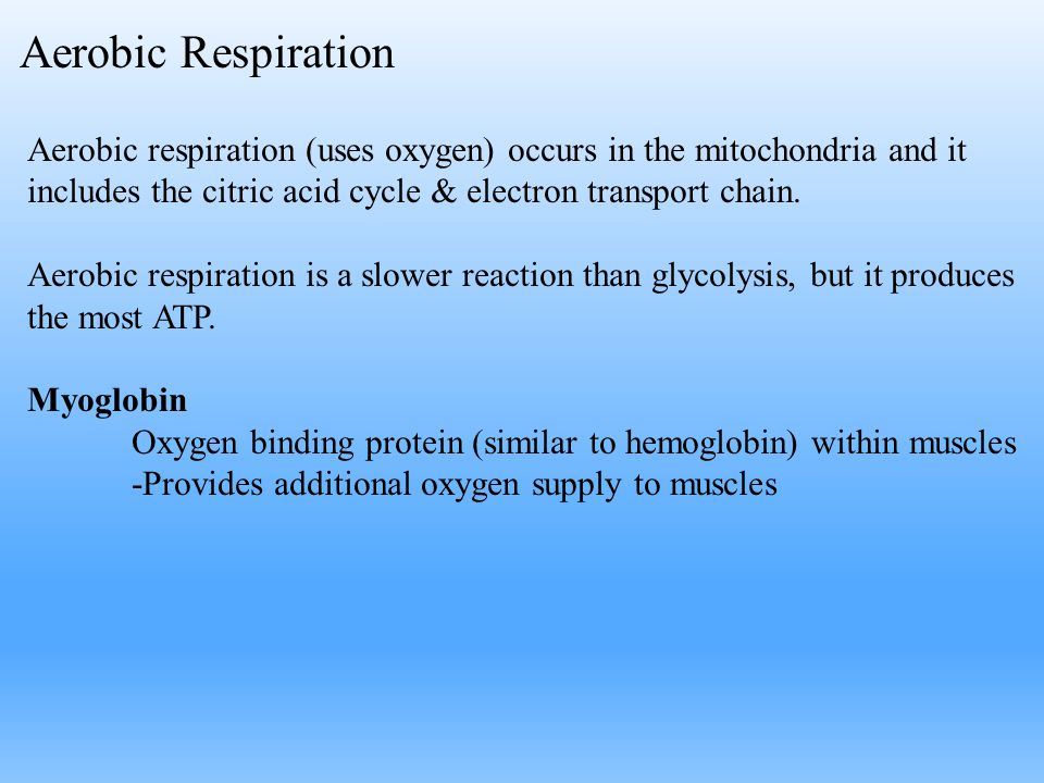 Aerobic Respiration Aerobic respiration (uses oxygen) occurs in the mitochondria and it includes the citric acid cycle & electron transport chain.