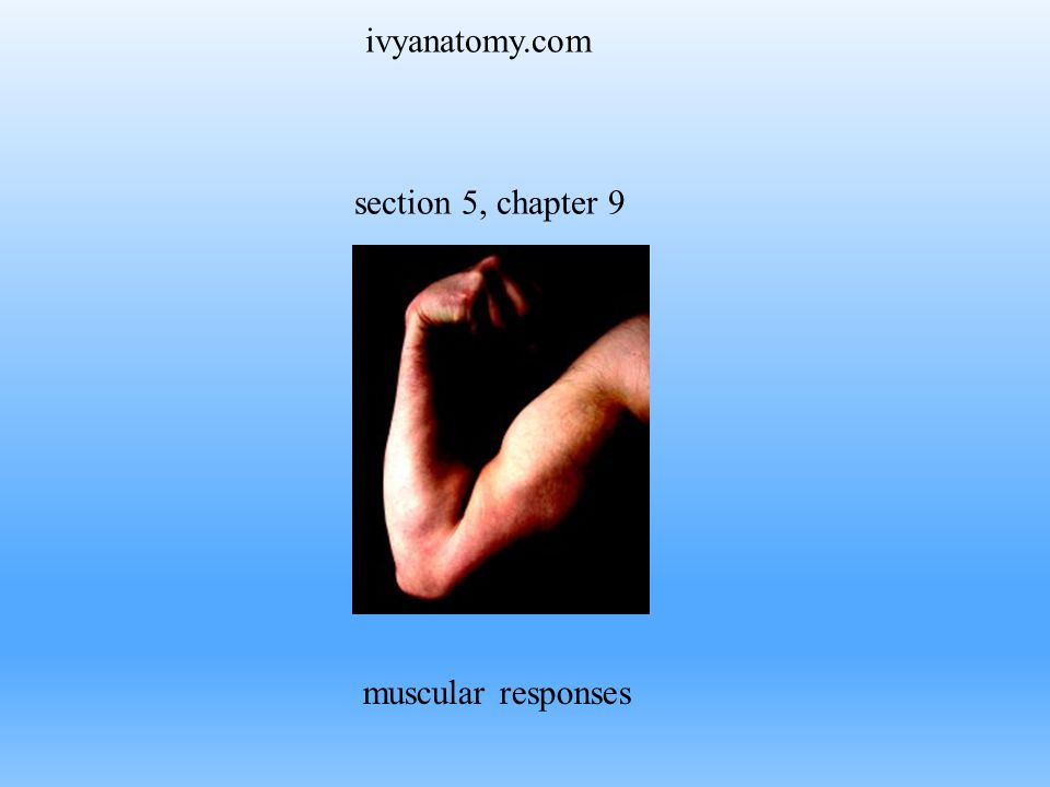 ivyanatomy.com section 5, chapter 9 muscular responses