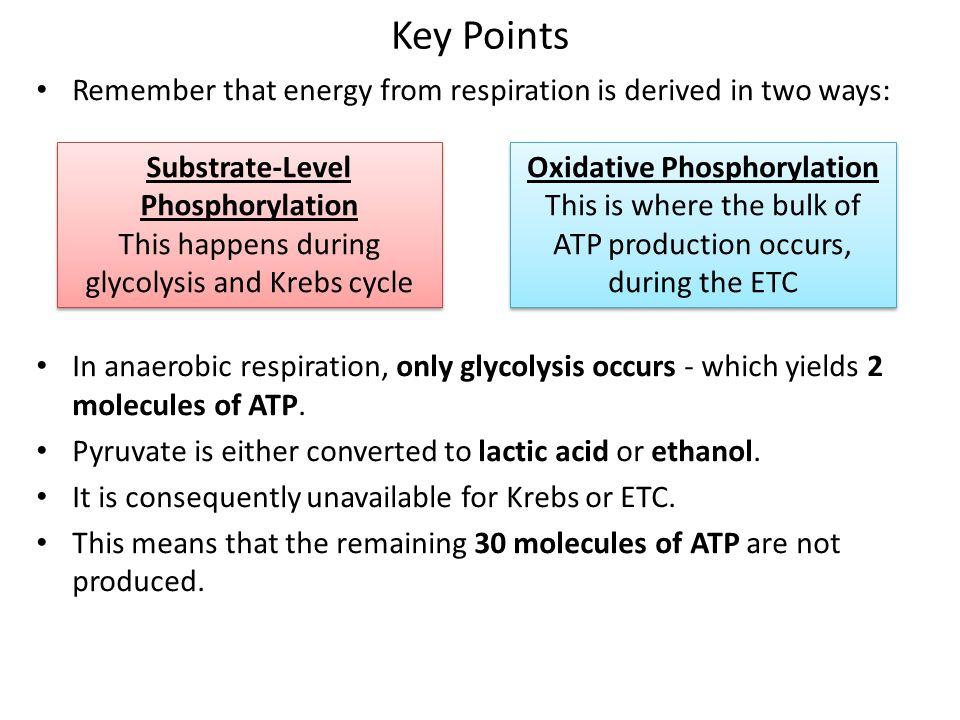 Substrate-Level Phosphorylation Oxidative Phosphorylation