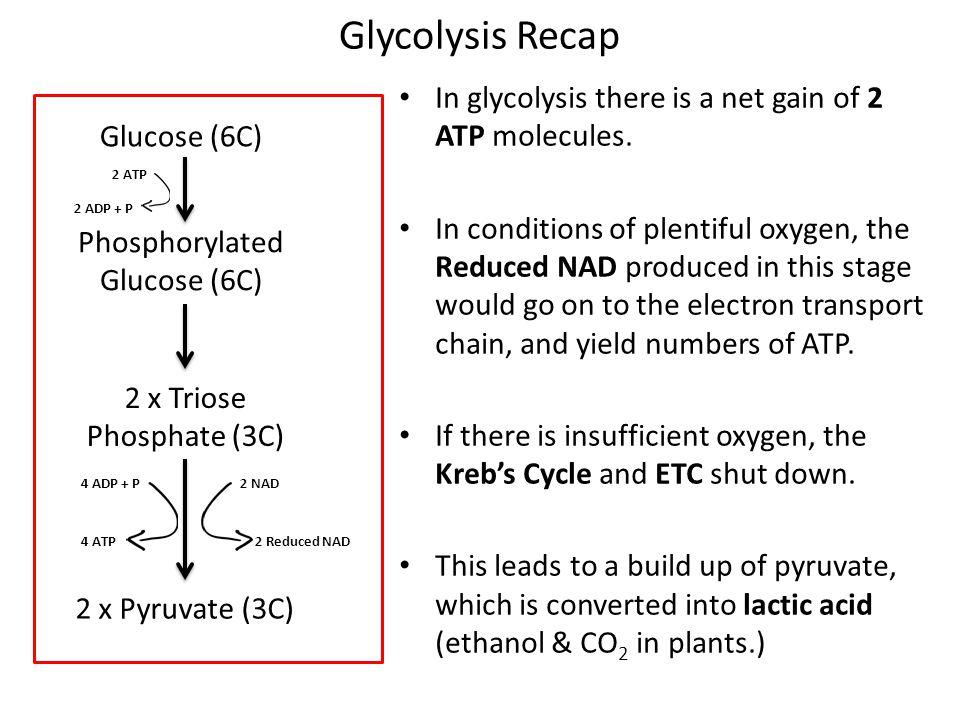 Phosphorylated Glucose (6C)