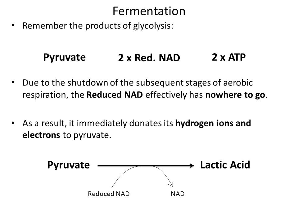 Fermentation Pyruvate 2 x Red. NAD 2 x ATP Pyruvate Lactic Acid