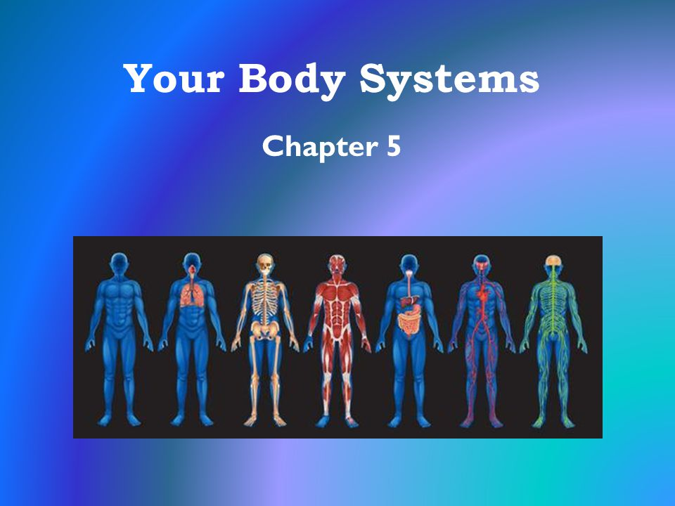 Your Body Systems Chapter 5