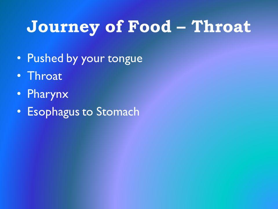 Journey of Food – Throat