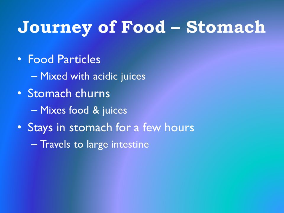 Journey of Food – Stomach