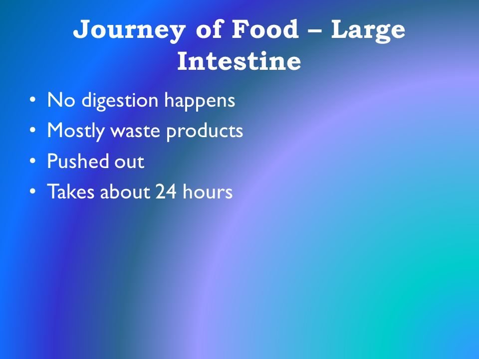 Journey of Food – Large Intestine