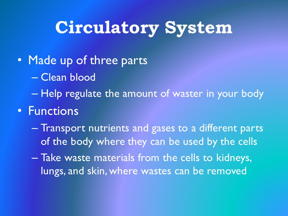 Circulatory System Made up of three parts Functions Clean blood