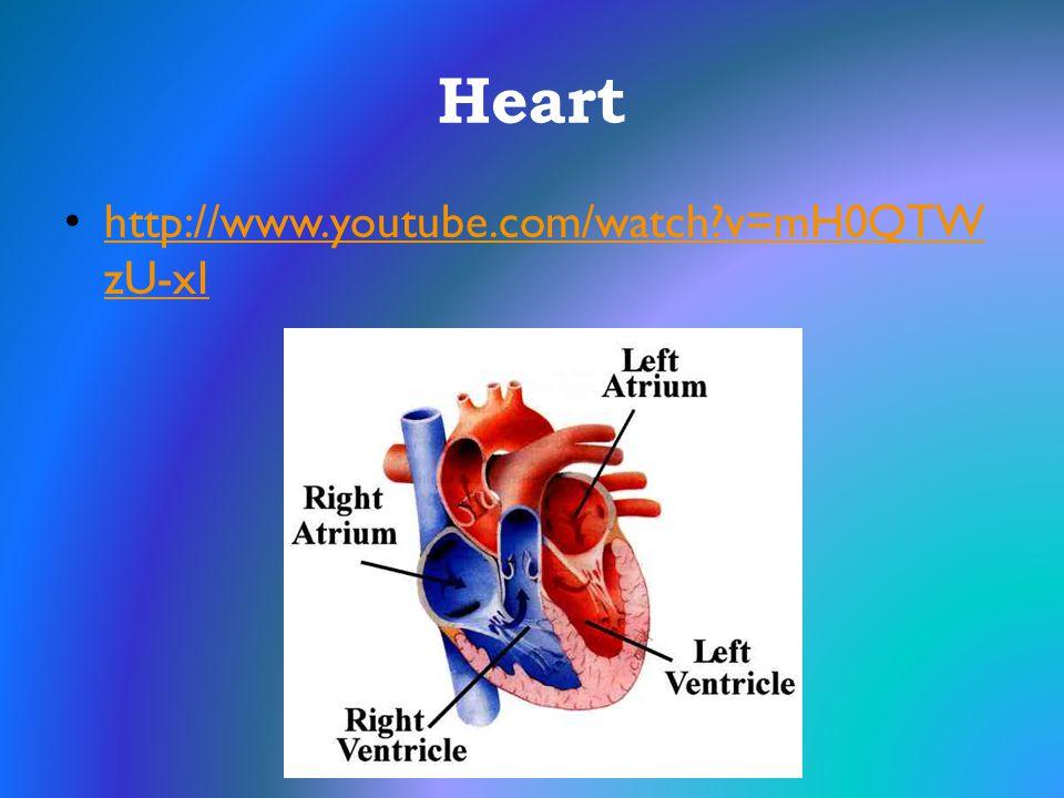 Heart http://www.youtube.com/watch v=mH0QTWzU-xI