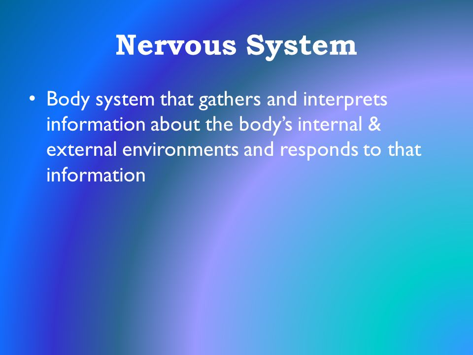 Nervous System Body system that gathers and interprets information about the body's internal & external environments and responds to that information.
