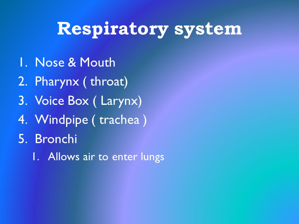 Respiratory system Nose & Mouth Pharynx ( throat) Voice Box ( Larynx)