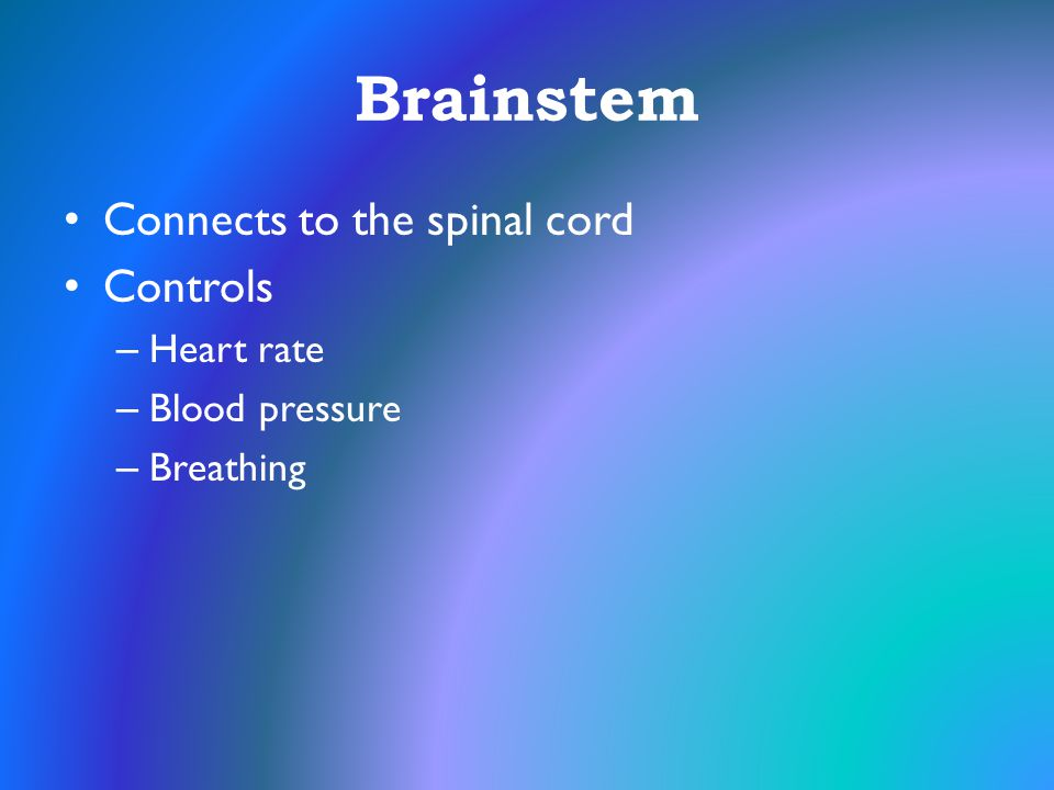 Brainstem Connects to the spinal cord Controls Heart rate