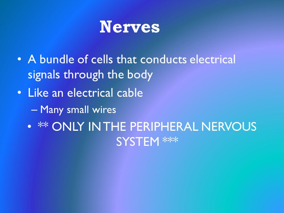 ** ONLY IN THE PERIPHERAL NERVOUS SYSTEM ***