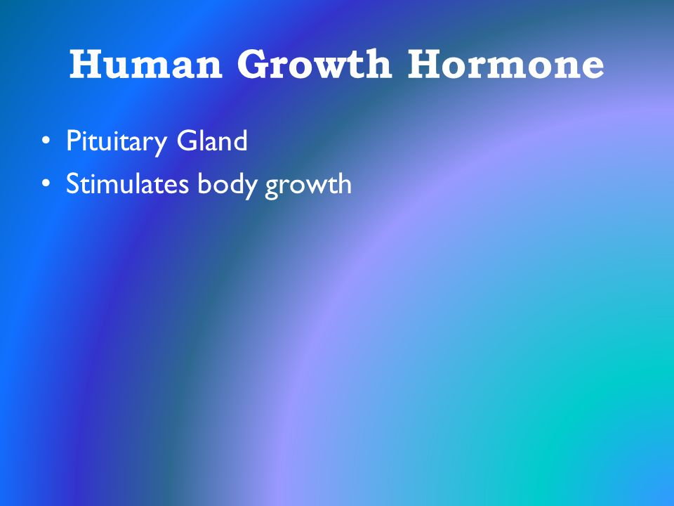 Human Growth Hormone Pituitary Gland Stimulates body growth