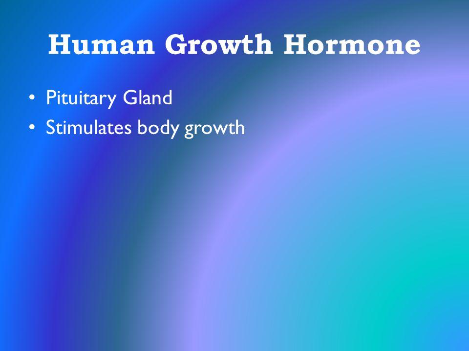 Human Growth Hormone Pituitary Gland Stimulates body growth