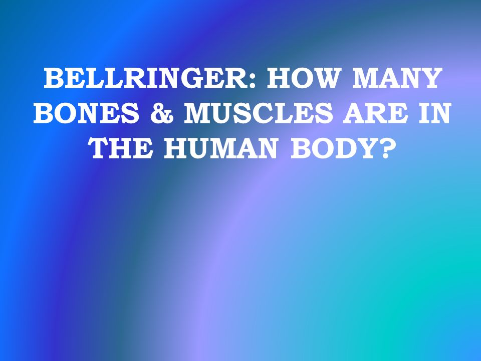 your body systems chapter ppt download, Human Body