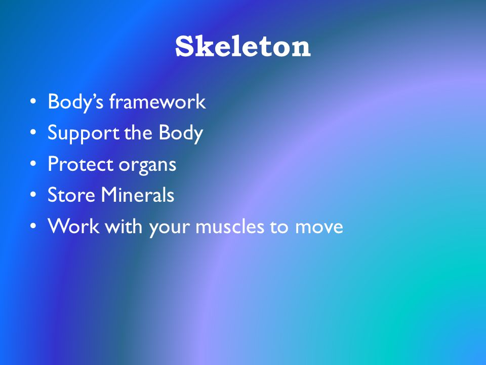 Skeleton Body's framework Support the Body Protect organs