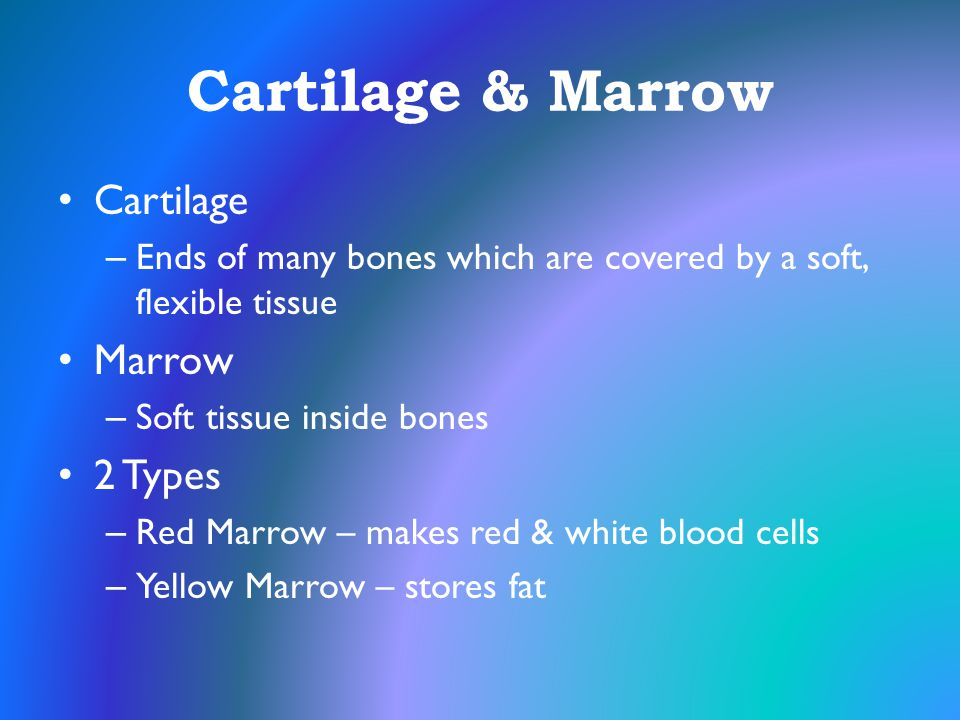 Cartilage & Marrow Cartilage Marrow 2 Types