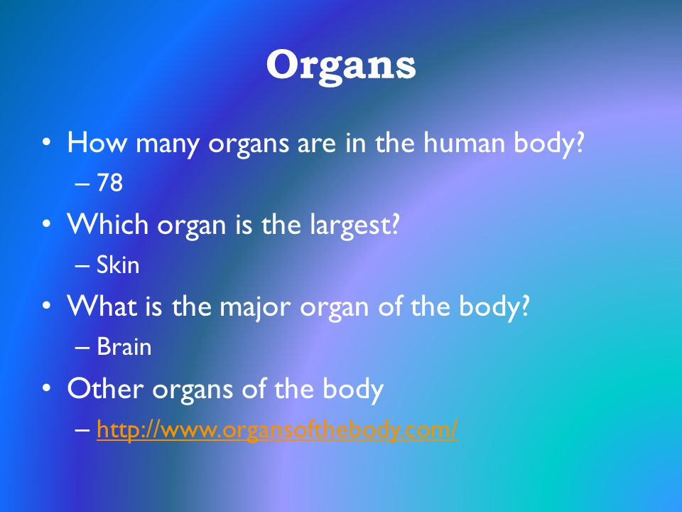 Organs How many organs are in the human body