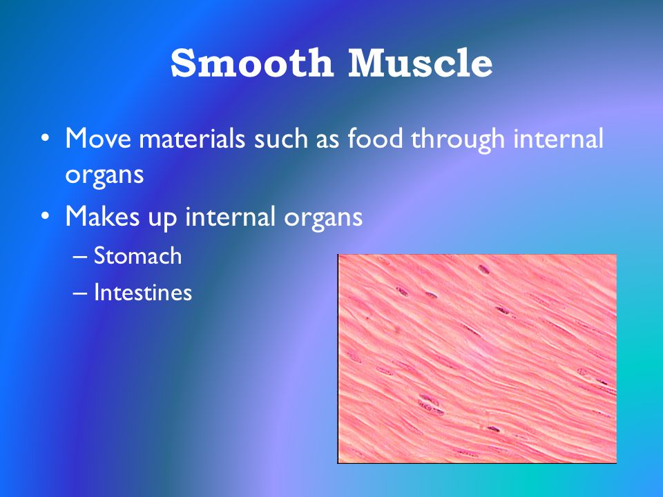 Smooth Muscle Move materials such as food through internal organs