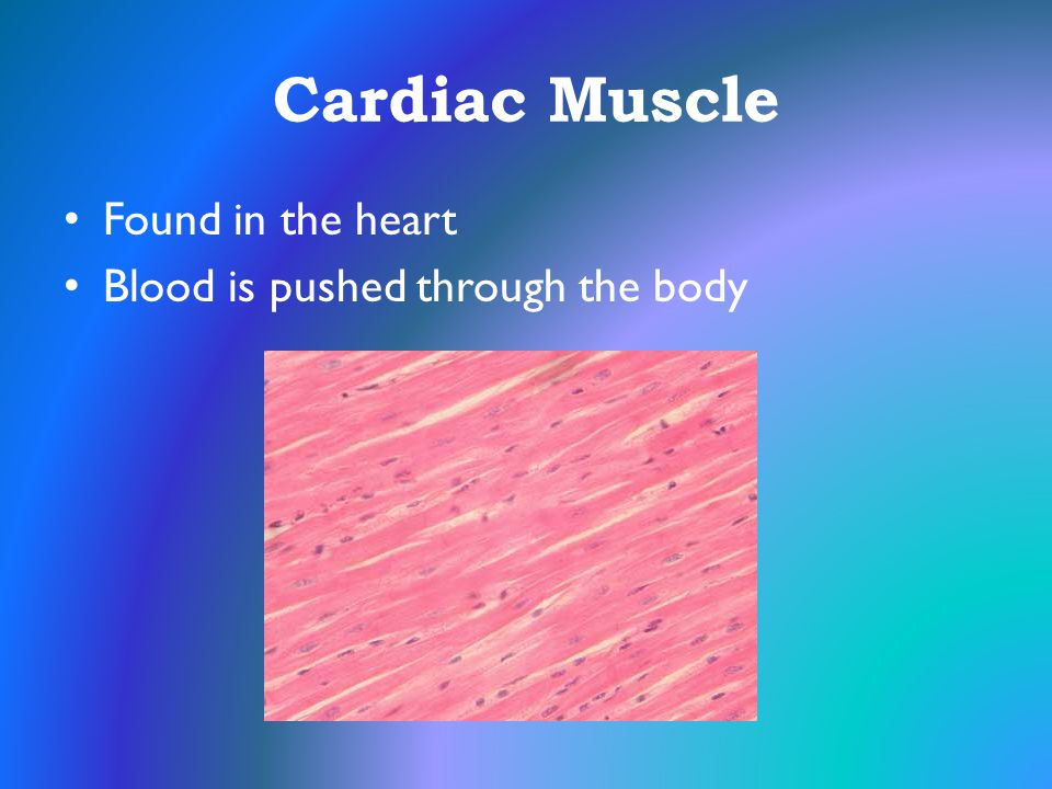 Cardiac Muscle Found in the heart Blood is pushed through the body