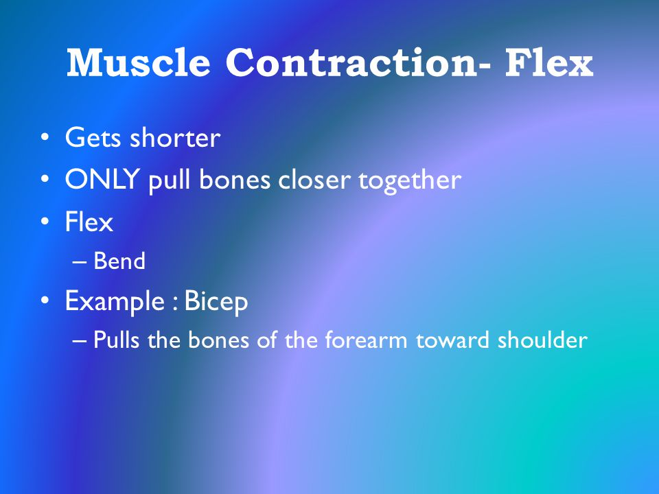 Muscle Contraction- Flex
