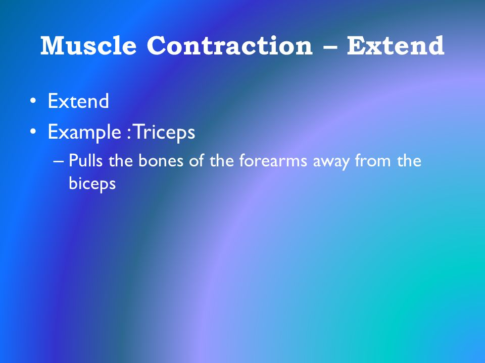 Muscle Contraction – Extend