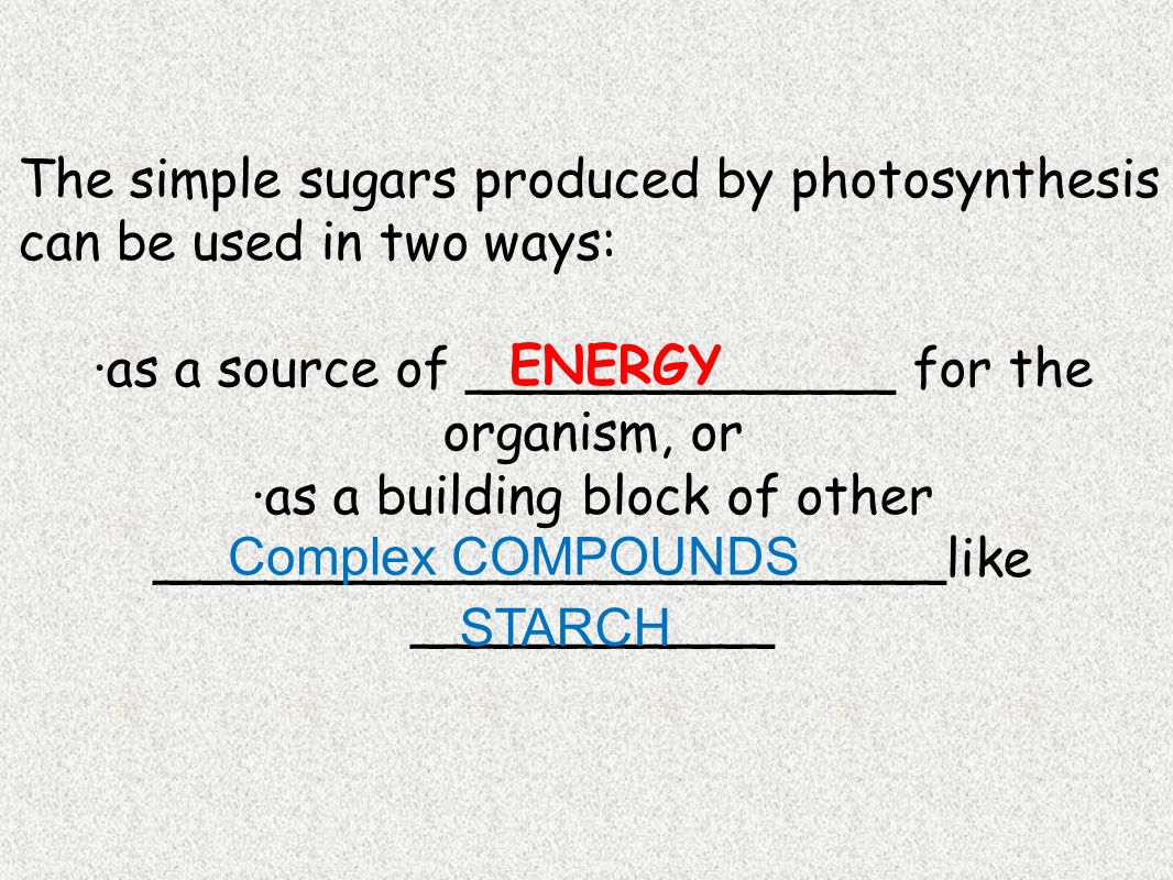 The simple sugars produced by photosynthesis can be used in two ways: