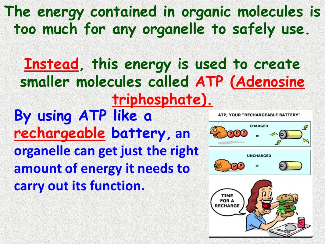 The energy contained in organic molecules is too much for any organelle to safely use.