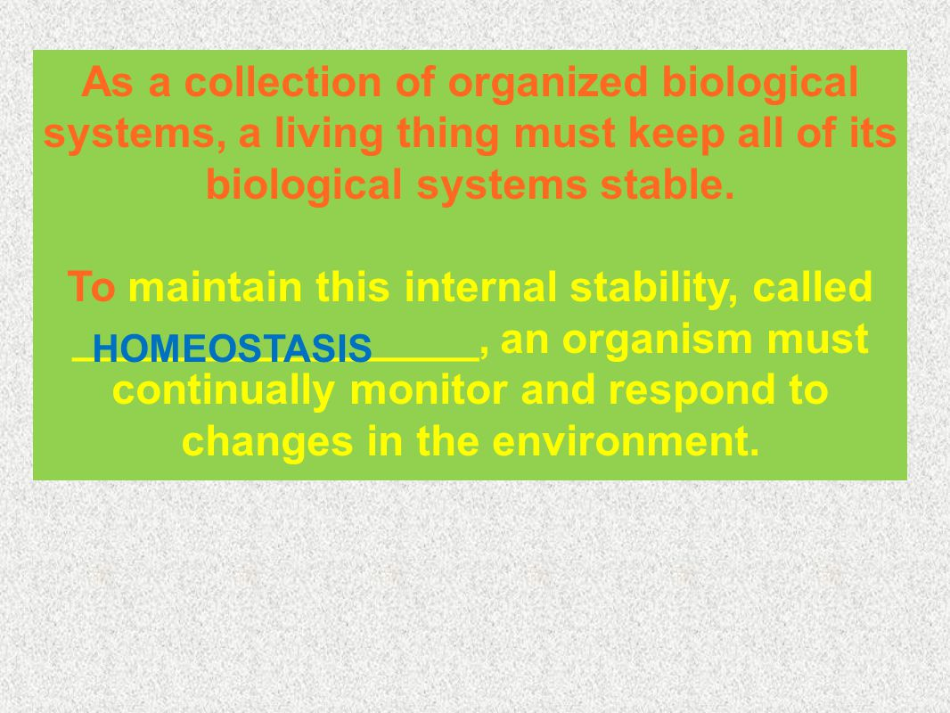 As a collection of organized biological systems, a living thing must keep all of its biological systems stable.