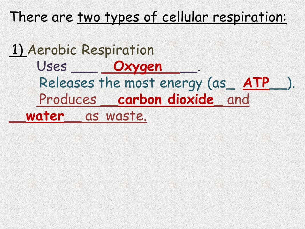 There are two types of cellular respiration: