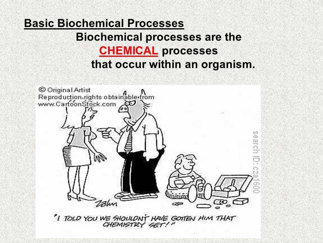 Biochemical processes are the that occur within an organism.