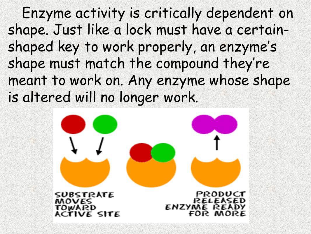 Enzyme activity is critically dependent on shape