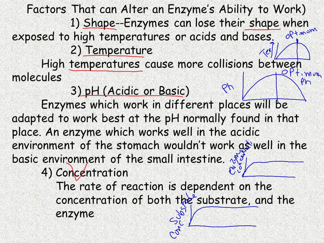 Factors That can Alter an Enzyme's Ability to Work)