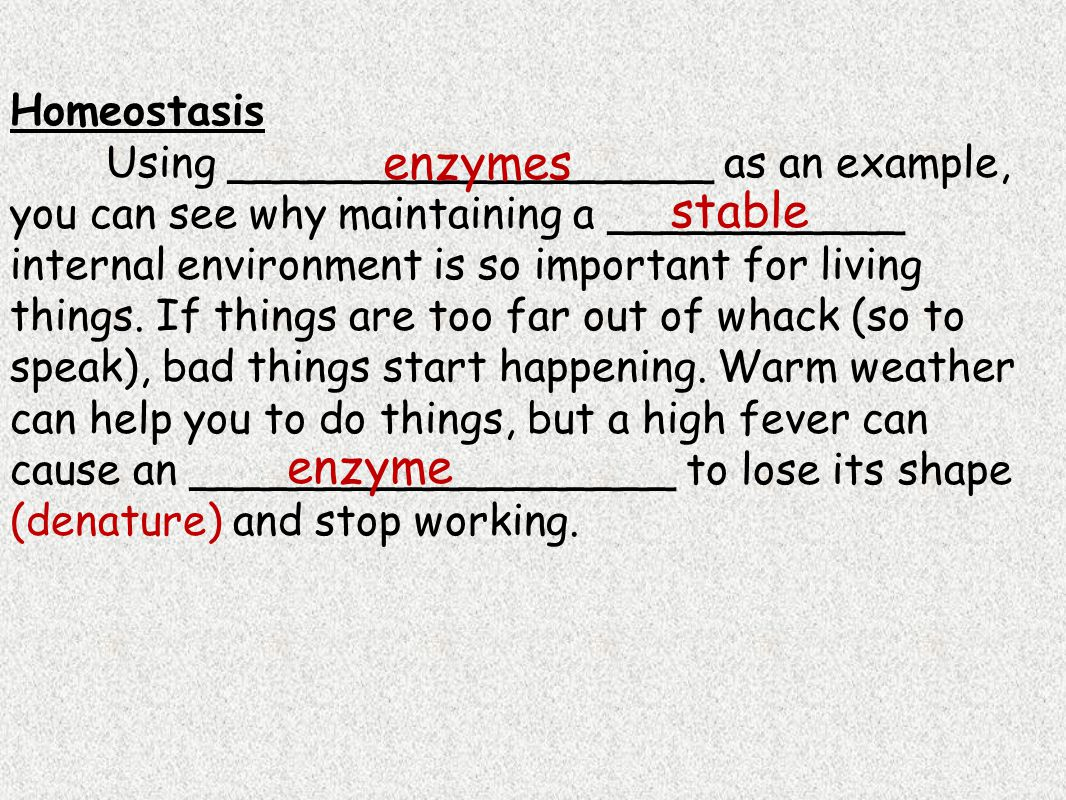enzymes stable enzyme Homeostasis