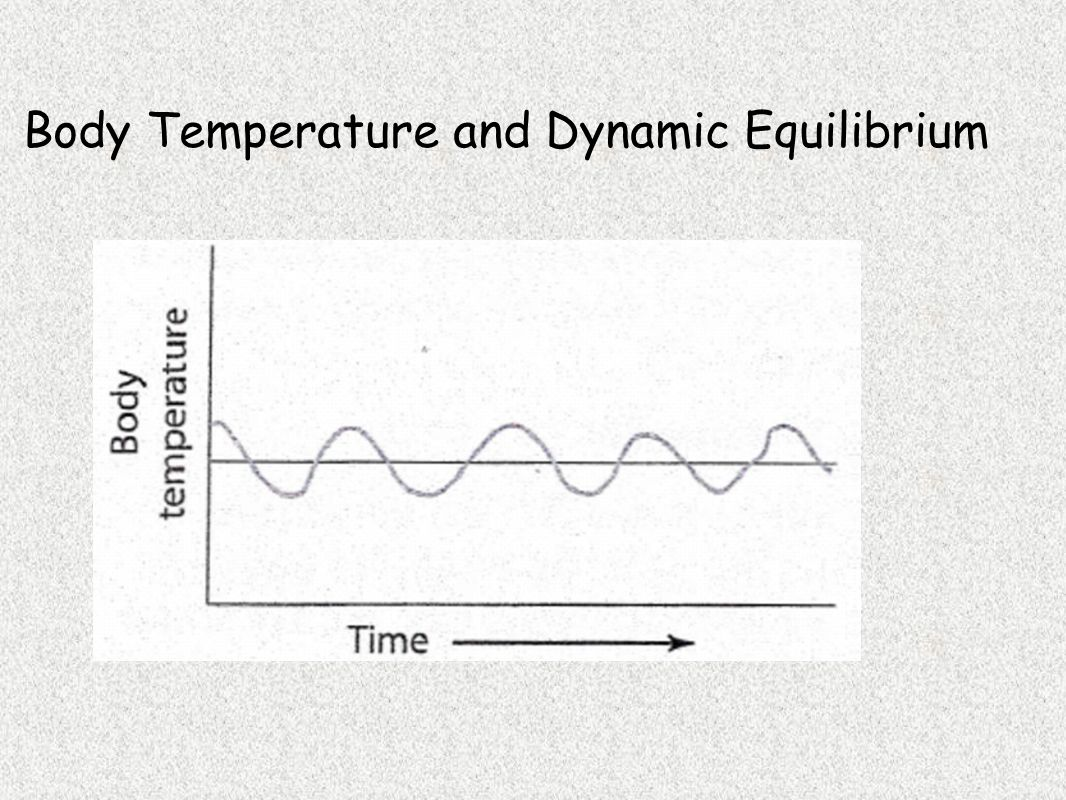 Body Temperature and Dynamic Equilibrium