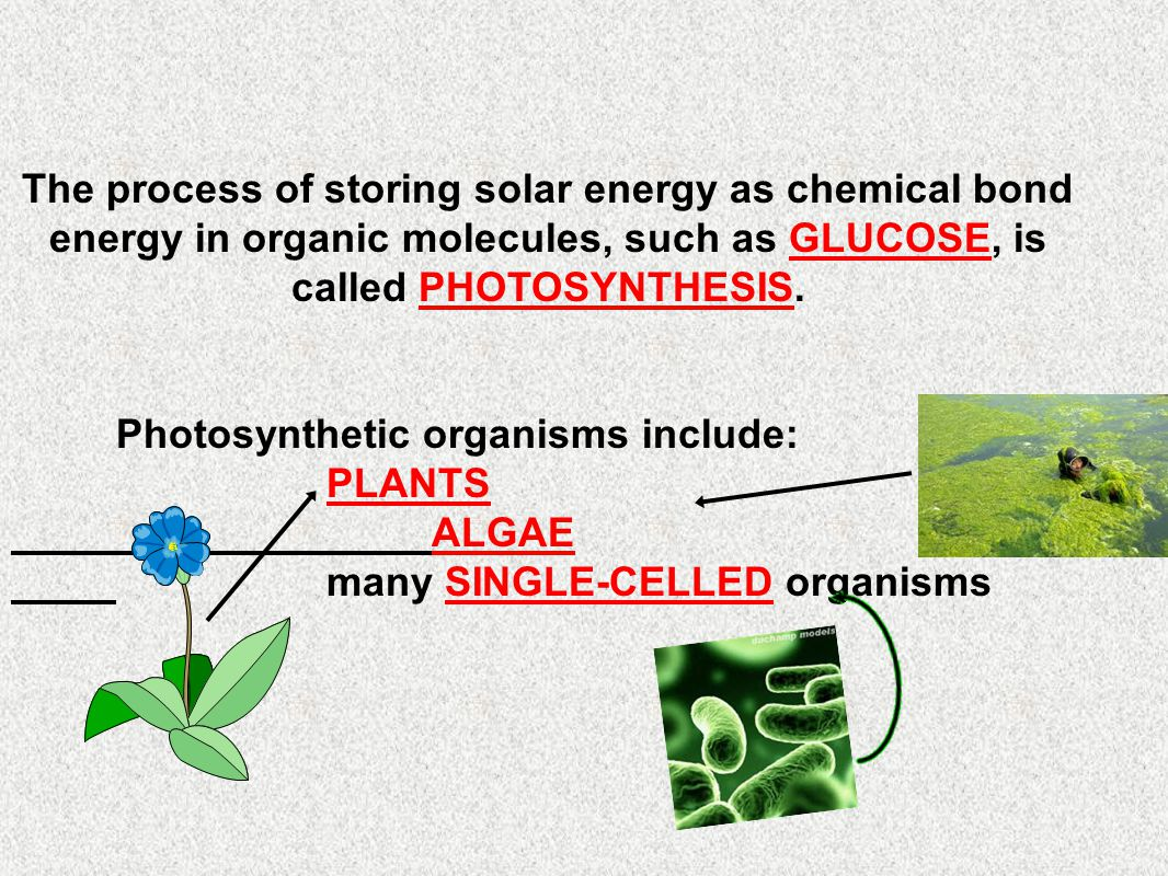 The process of storing solar energy as chemical bond energy in organic molecules, such as GLUCOSE, is called PHOTOSYNTHESIS.