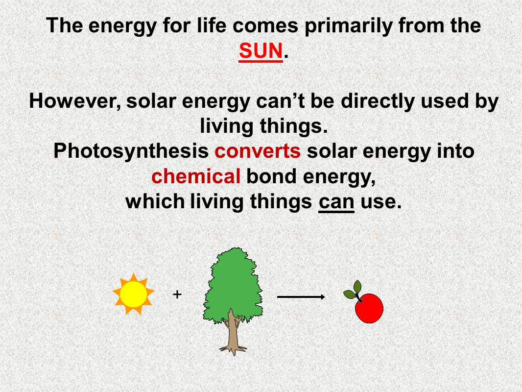 The energy for life comes primarily from the SUN.