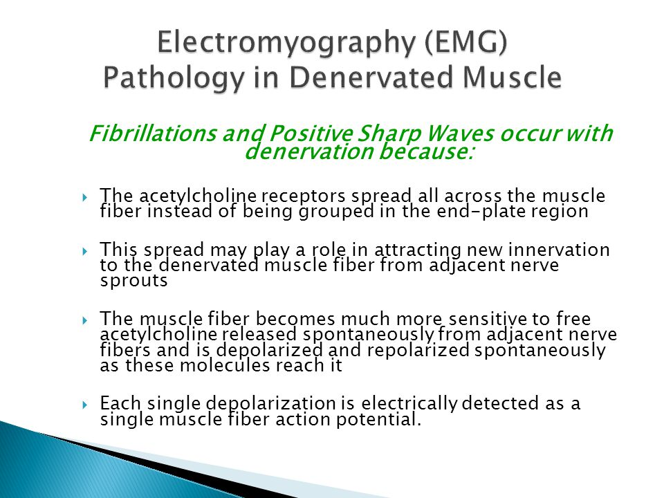 Electromyography (EMG) Pathology in Denervated Muscle
