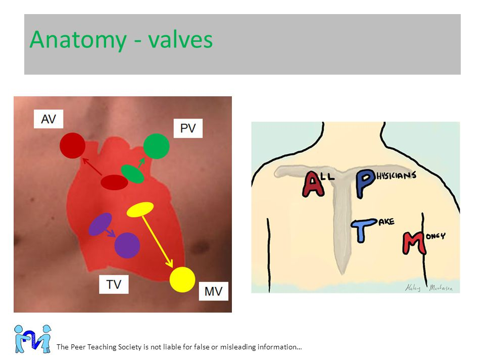 Anatomy - valves The Peer Teaching Society is not liable for false or misleading information…