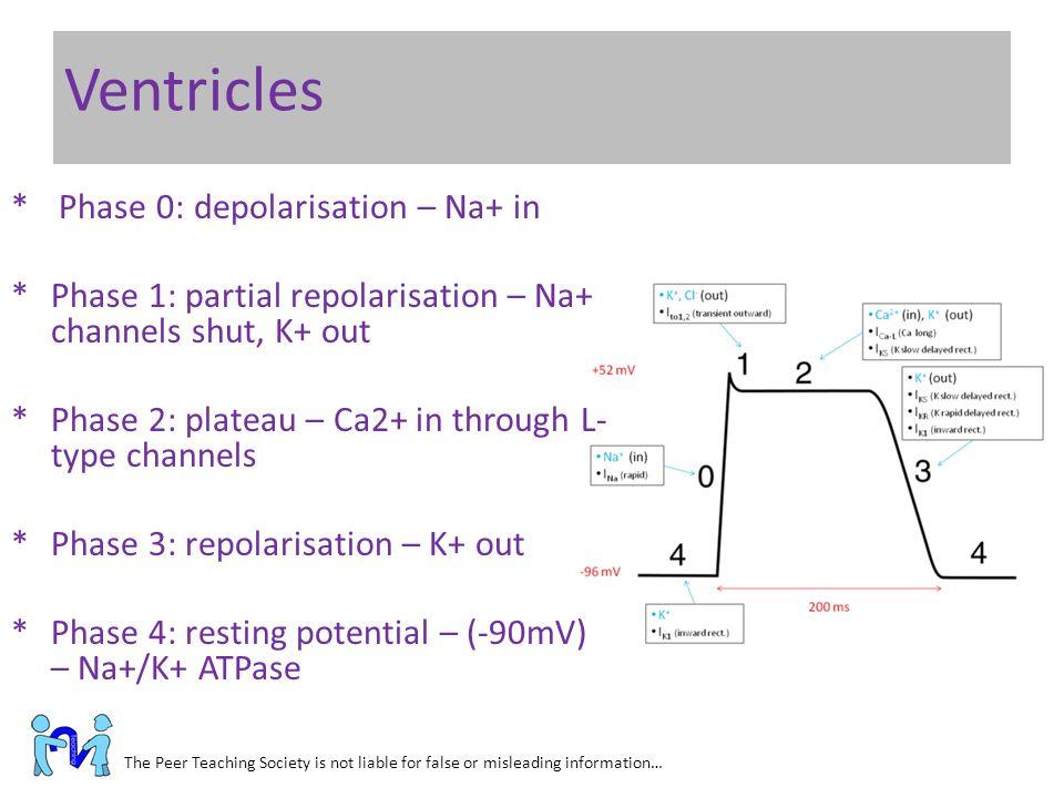 Ventricles Phase 0: depolarisation – Na+ in