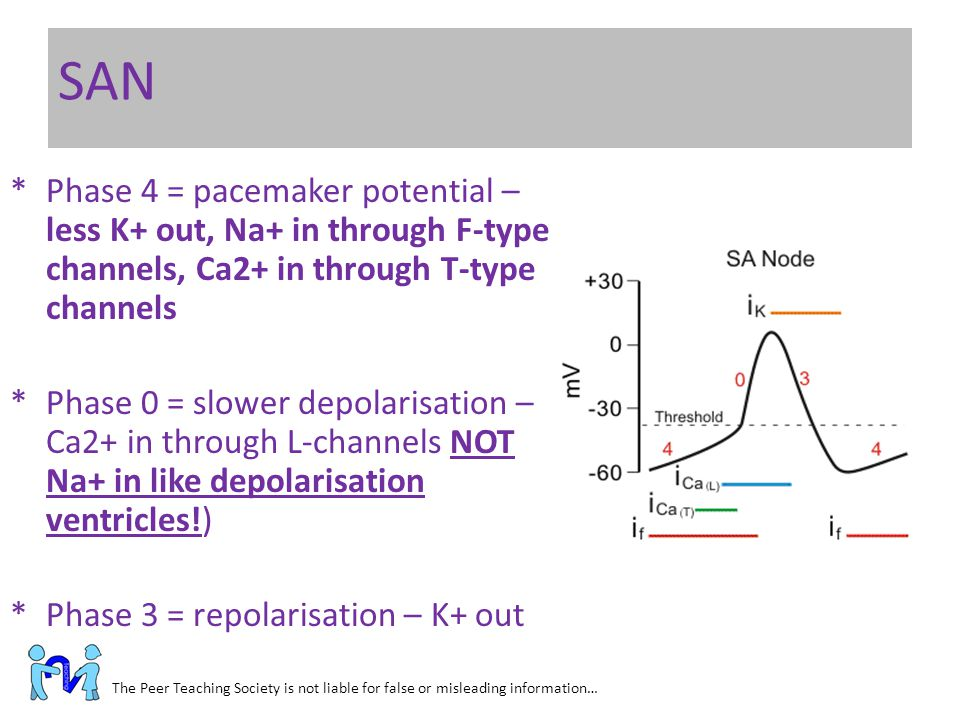 SAN Phase 4 = pacemaker potential – less K+ out, Na+ in through F-type channels, Ca2+ in through T-type channels.