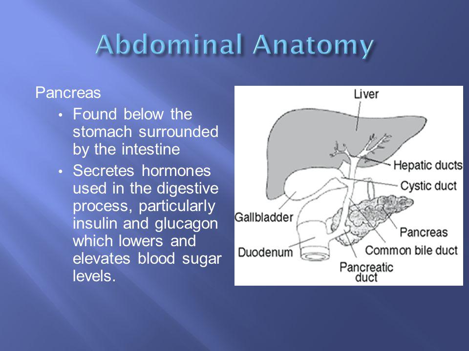 Abdominal Anatomy Pancreas